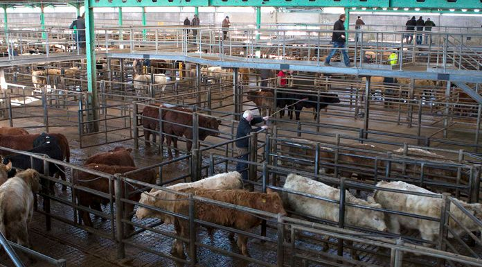 US Seal of Approval great news for Louth Beef Farmers